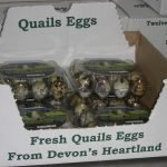 quails eggs for sale